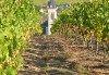 Vignes Saint Aubin de Luigné